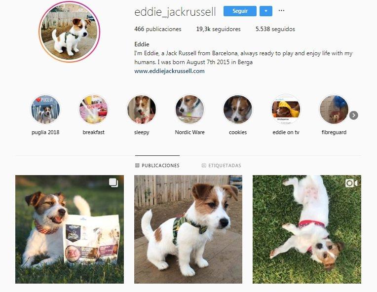 Los 10 perros más populares de Instagram